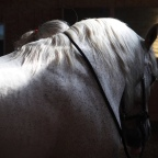 Part 15 – Searching for the Dream Horse……