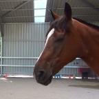Part 10 – Can Horses Talk?