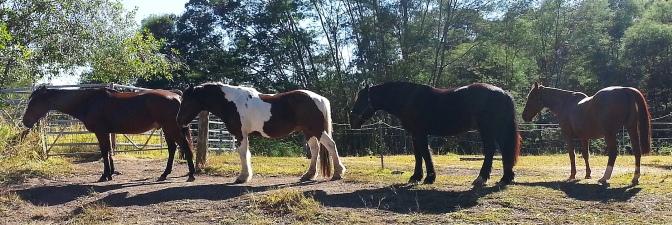 horse blog 1