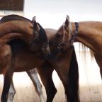 1.  Horse Adventures in Europe 2018!