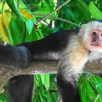 Part 96 – Monkeys, Macaws and Volcanoes!