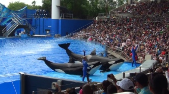 sea world 8