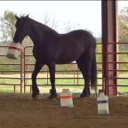 Part 104 – Horse Adventures in Arkansas!
