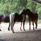 Part 122 – Sixteen Hooves!