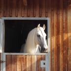 4. Anja Beran – Analysis of the Horse