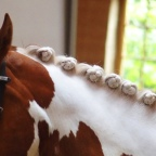 9.  Anja Beran – Benefits for any breed!