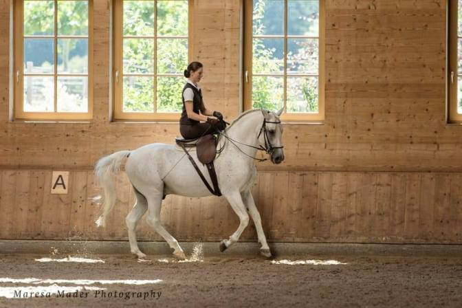 anja side saddle