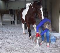 magnum hooves front (7)