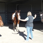 Part 15 – Clicker Training – My Horse Won't Respect Me!